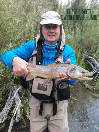 Idaho brown trout